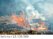 Купить «Сухая трава горит», фото № 23135560, снято 18 апреля 2016 г. (c) Pukhov K / Фотобанк Лори