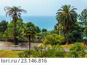 Купить «Сухуми, набережная с пальмами», фото № 23146816, снято 3 августа 2015 г. (c) Сергей Гусев / Фотобанк Лори