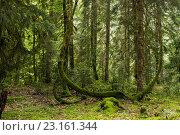 Купить «Лес. Абхазия.», фото № 23161344, снято 8 июня 2016 г. (c) Типляшина Евгения / Фотобанк Лори