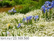 Купить «Ландшафтный дизайн», фото № 23169560, снято 4 мая 2016 г. (c) Наталья Двухимённая / Фотобанк Лори