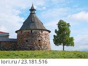 Купить «Башня Соловецкого монастыря и дерево», фото № 23181516, снято 13 июня 2016 г. (c) Дмитрий Грушин / Фотобанк Лори