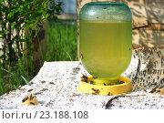 Пчёлы на поилке. Стоковое фото, фотограф Игорь Потапов / Фотобанк Лори