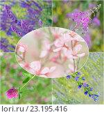 Купить «Коллаж из фотографий полевых цветов», фото № 23195416, снято 26 мая 2018 г. (c) Йомка / Фотобанк Лори