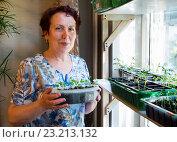Купить «Пожилая женщина выращивает рассаду на окне квартиры», эксклюзивное фото № 23213132, снято 1 мая 2016 г. (c) Вячеслав Палес / Фотобанк Лори