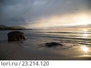 Купить «Лофотенский пляж, Норвегия», фото № 23214120, снято 1 июля 2016 г. (c) Tamara Sushko / Фотобанк Лори