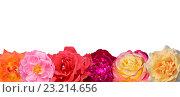 Купить «Набор красных цветов на белом фоне», фото № 23214656, снято 22 октября 2019 г. (c) Татьяна Васильева / Фотобанк Лори