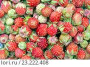 Лесная ягода. Стоковое фото, фотограф Екатерина  Преснякова / Фотобанк Лори