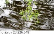 Купить «Ветка дерева над водой в ветреный пасмурный день», видеоролик № 23226548, снято 8 июля 2016 г. (c) Румянцева Наталия / Фотобанк Лори
