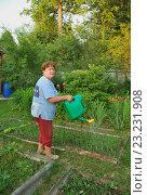 Пенсионерка поливает грядку. Стоковое фото, фотограф Инесса Гаварс / Фотобанк Лори