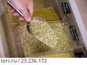 Купить «green buckwheat shop», фото № 23236172, снято 17 августа 2018 г. (c) Яков Филимонов / Фотобанк Лори