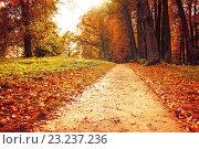 Купить «Аллея в осеннем парке», фото № 23237236, снято 28 сентября 2013 г. (c) Зезелина Марина / Фотобанк Лори