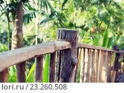 Купить «wooden fence at tropical woods or park», фото № 23260508, снято 15 февраля 2015 г. (c) Syda Productions / Фотобанк Лори