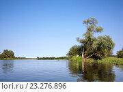 Дерево на берегу реки. Стоковое фото, фотограф Андрей Силивончик / Фотобанк Лори