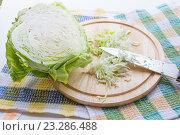 Купить «Нашинкованная капуста», фото № 23286488, снято 19 июля 2016 г. (c) Дудакова / Фотобанк Лори