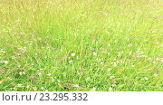 Купить «clover and grass growing on meadow or field 49», видеоролик № 23295332, снято 24 июня 2016 г. (c) Syda Productions / Фотобанк Лори