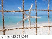 Морская звезда. Стоковое фото, фотограф Татьяна Руденко / Фотобанк Лори