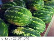 close up of watermelon at street farmers market. Стоковое фото, фотограф Syda Productions / Фотобанк Лори