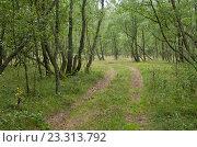 Дорога через  русский лес, эксклюзивное фото № 23313792, снято 24 июля 2016 г. (c) Svet / Фотобанк Лори