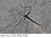 Старый срез дерева с трещиной. Стоковое фото, фотограф Маргарита Варенникова / Фотобанк Лори