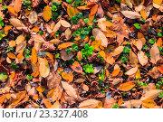 Осенние листья на земле, фон. Стоковое фото, фотограф Алексей Костенко / Фотобанк Лори