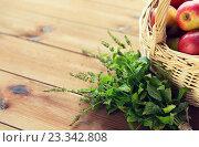 Купить «close up of melissa and basket with apples», фото № 23342808, снято 19 октября 2015 г. (c) Syda Productions / Фотобанк Лори