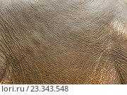 Кожа слона, текстура. Стоковое фото, фотограф Алексей Безрук / Фотобанк Лори