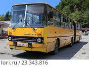 Купить «Желтый городской сочленённый автобус Ikarus 280 в городе Гагра, Абхазия», эксклюзивное фото № 23343816, снято 22 июля 2016 г. (c) Алексей Гусев / Фотобанк Лори