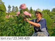 Купить «Пожилая женщина садовод смотрит на розовые пионы», фото № 23349420, снято 25 июня 2016 г. (c) Максим Мицун / Фотобанк Лори