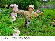 Купить «Пожилая женщина садовод сидит рядом с розовыми пионами», фото № 23349556, снято 27 июня 2016 г. (c) Максим Мицун / Фотобанк Лори