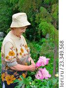 Купить «Пожилая женщина садовод стоит и улыбается рядом с розовыми пионами», фото № 23349568, снято 27 июня 2016 г. (c) Максим Мицун / Фотобанк Лори