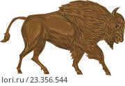 Купить «Североамериканский Бизон», иллюстрация № 23356544 (c) Aloysius Patrimonio / Фотобанк Лори