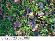 Опавшие осенние листья, фон. Стоковое фото, фотограф Алексей Костенко / Фотобанк Лори