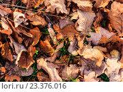 Опавшие листья, фон. Стоковое фото, фотограф Алексей Костенко / Фотобанк Лори