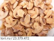 Купить «Frosen mushrooms», фото № 23379472, снято 31 августа 2009 г. (c) Мельников Дмитрий / Фотобанк Лори
