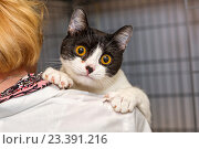 Купить «Маленький котенок в руках врача», фото № 23391216, снято 13 августа 2016 г. (c) Okssi / Фотобанк Лори