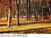 Купить «Закат в осеннем парке - красочный осенний пейзаж», фото № 23394432, снято 12 октября 2015 г. (c) Зезелина Марина / Фотобанк Лори