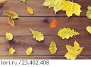 Купить «set of many different fallen autumn leaves», фото № 23402408, снято 19 октября 2015 г. (c) Syda Productions / Фотобанк Лори