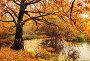 Осенний лесной пейзаж - пруд с опавшими сухими листьями и старым дубом, фото № 23413240, снято 9 августа 2017 г. (c) Зезелина Марина / Фотобанк Лори