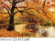 Купить «Осенний лесной пейзаж - пруд с опавшими сухими листьями и старым дубом», фото № 23413240, снято 20 октября 2018 г. (c) Зезелина Марина / Фотобанк Лори