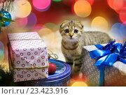 Купить «Котенок», фото № 23423916, снято 20 декабря 2015 г. (c) hommik / Фотобанк Лори