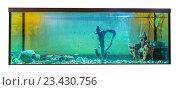 Купить «Большой аквариум с тропическими рыбами на белом фоне», фото № 23430756, снято 5 августа 2016 г. (c) Евгений Ткачёв / Фотобанк Лори