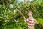 Малчик собирает яблоки в саду, фото № 23446460, снято 28 августа 2016 г. (c) Юлия Кузнецова / Фотобанк Лори