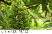 Купить «Echium acanthocarpum in family of Boraginaceae», видеоролик № 23448132, снято 27 апреля 2016 г. (c) BestPhotoStudio / Фотобанк Лори
