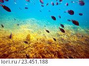 Купить «tropical fishes at coral reef area», фото № 23451188, снято 28 декабря 2011 г. (c) Яков Филимонов / Фотобанк Лори