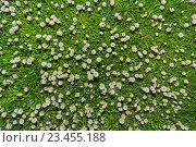 Луг заросший с ромашками. Стоковое фото, фотограф Александр Степанов / Фотобанк Лори