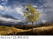 Карагач. Осень. Дерево. Тучи. Стоковое фото, фотограф Дмитрий Третьяков / Фотобанк Лори