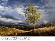 Купить «Карагач. Осень. Дерево. Тучи», фото № 23455612, снято 17 февраля 2019 г. (c) Дмитрий Третьяков / Фотобанк Лори