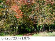 Купить «Осенний лес», фото № 23471876, снято 22 октября 2015 г. (c) Татьяна Кахилл / Фотобанк Лори