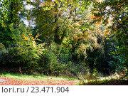 Купить «Осенний лес», фото № 23471904, снято 22 октября 2015 г. (c) Татьяна Кахилл / Фотобанк Лори