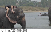 Слон поливает девушку из хобота. Стоковое видео, видеограф DPS / Фотобанк Лори